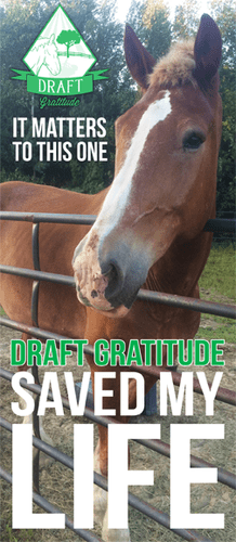 Draft Gratitude Saved My Life