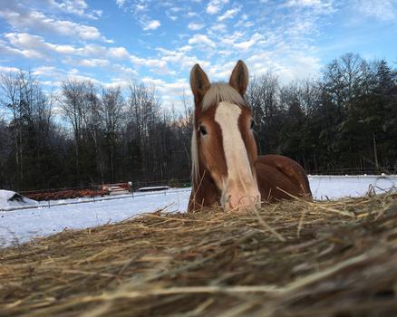 Draft Gratitude's new horse bob