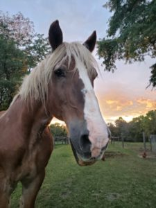 Update From The Barn – September 2019