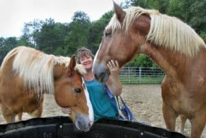 Two blind draft horses find a 'stable' home in Winchester