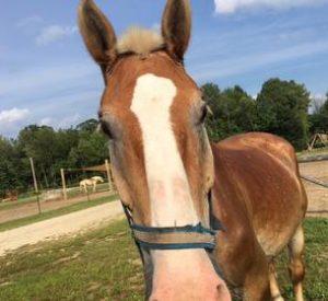 Rescued Draft Horse Bob