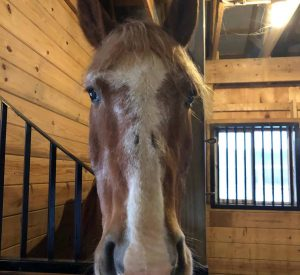 Jerry the horse