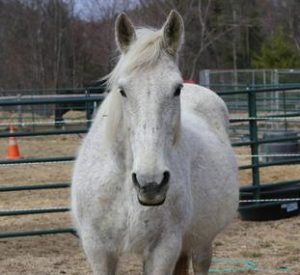 Rescued Draft Horse Pepper