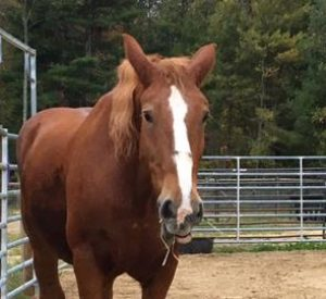 Rescued Draft Horse Cindy
