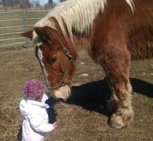 Rescued Draft Horse Sunny