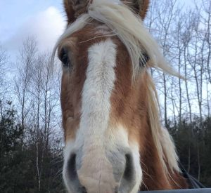 Patty the Horse